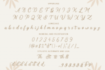 stellina calligraphy script font 10