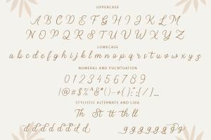 stellina calligraphy script font 10